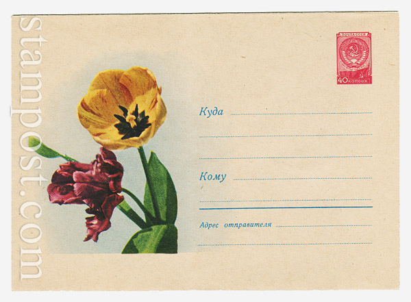 1042 ХМК СССР  1959 28.08 Тюльпаны
