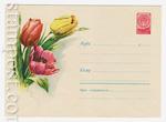 ХМК СССР 1960 г. 1163  1960 05.04 Тюльпаны