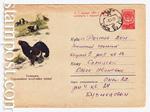 USSR Art Covers/1960 1324 P  1960 21.09 Тетерев. Охраняйте полезных птиц!