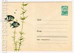 USSR Art Covers 1963 2580  1963 11.06 Аквариумные рыбки