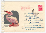 USSR Art Covers 1964 3208 USSR 1964 04.06 100 years of Moscow zoo. The pelicans. Used