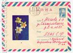 ХМК СССР 1967 г. 4590  1967 23.02 АВИА. Нарциссы