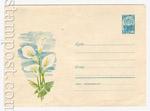 ХМК СССР 1967 г. 4622 СССР 1967 10.04 Цветы канны. Бум.0-1